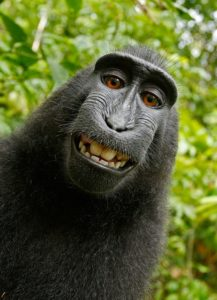 Monkey laugh