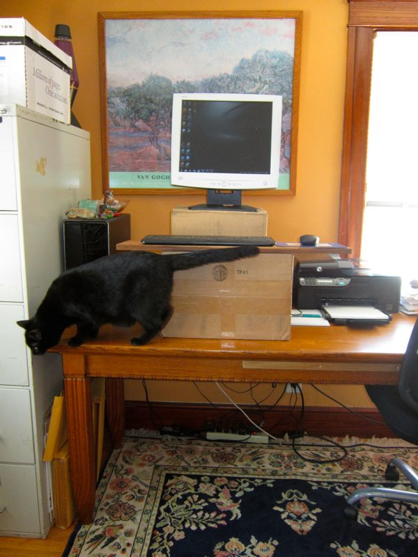 Victoria's totally cobbled-up standing desk arrangement (with obligatory cat accessory).