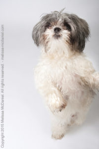 Melissa hopes photos of deaf dogs like Simba will encourage people to give any dog a chance.