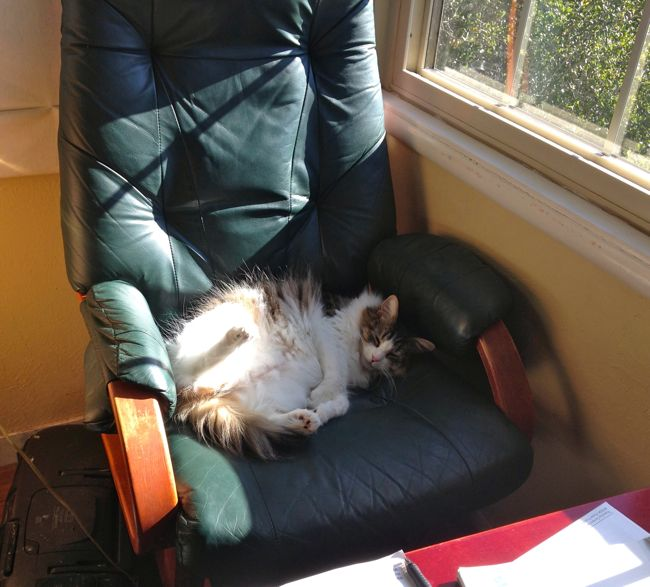 One of the hardships I have to overcome as a writer: keeping the kitty out of my writing chair!