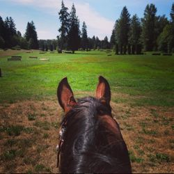 Horseback riding therapy —the view from the saddle.