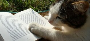 3 Things Novels and Cats Have in Common