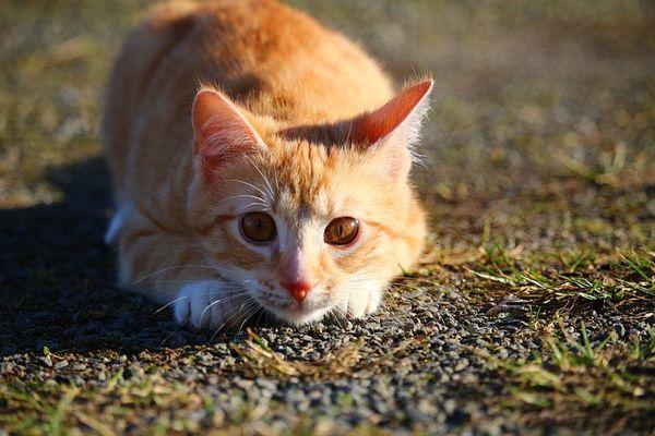 cat orange spazz 2