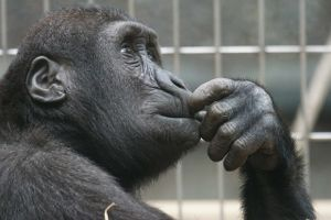 think-chimp-thoughtful-2