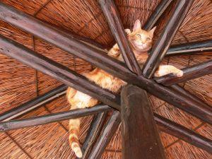 stuck-cat-comfort-zone-2