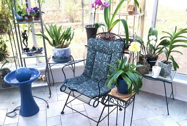 This is my sunroom writing spot. My orchids keep me company.