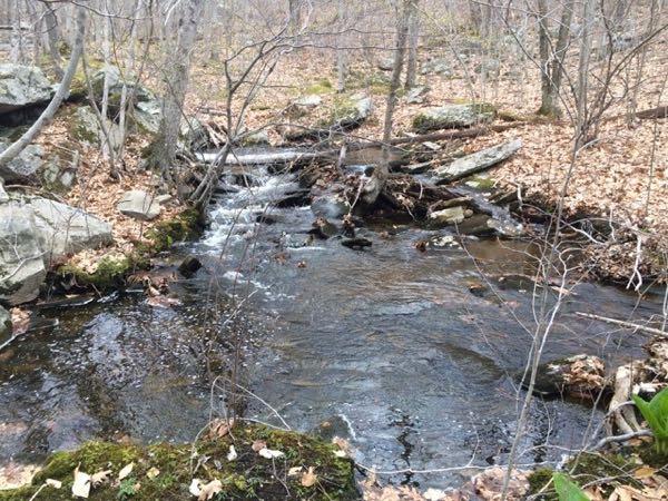 Favorite hiking spot—Francis Carter Nature Preserve.