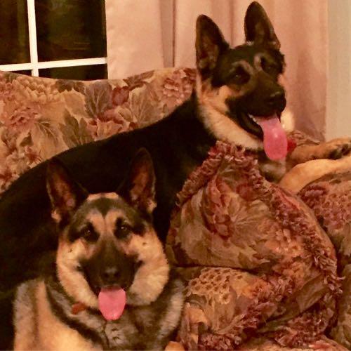 My beloved German Shepherds, Hansel and Gretel.