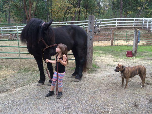 Little Girl Horse